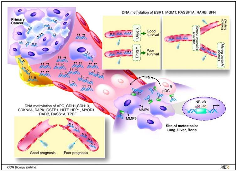 Serum Based Dna Methylation Biomarkers In Colorectal