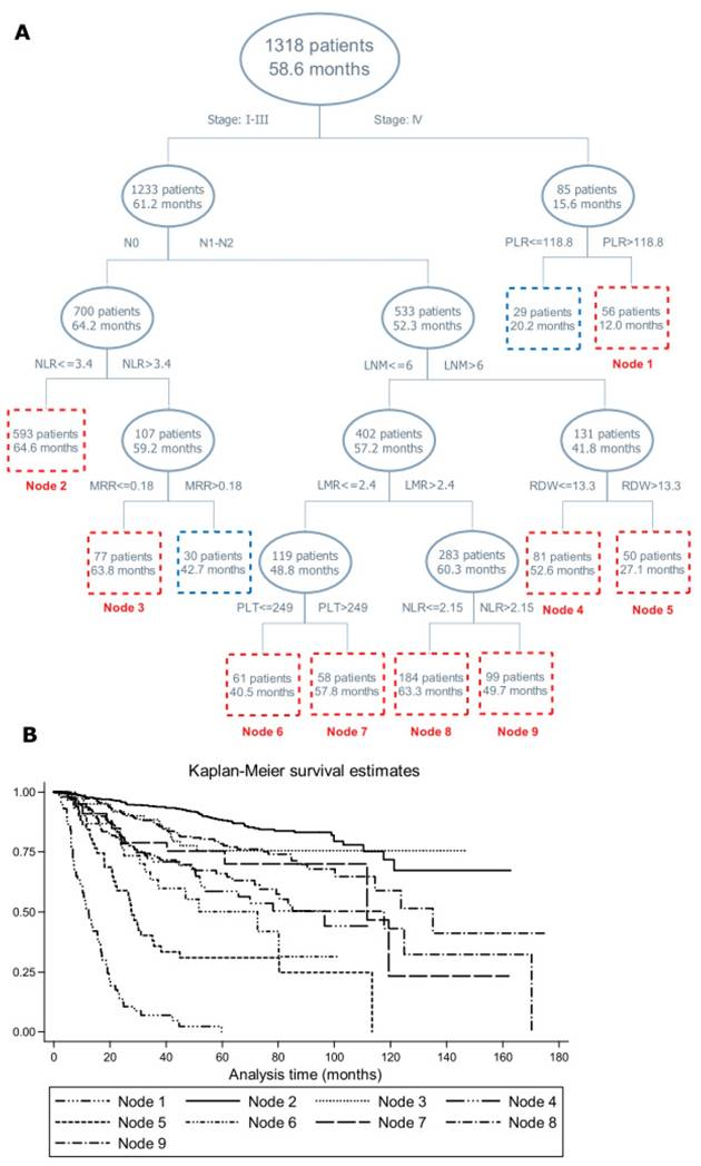 The Monocyte To Red Blood Cell Count Ratio Is A Strong Predictor Of Postoperative Survival In Colorectal Cancer Patients The Fujian Prospective Investigation Of Cancer Fiesta Study