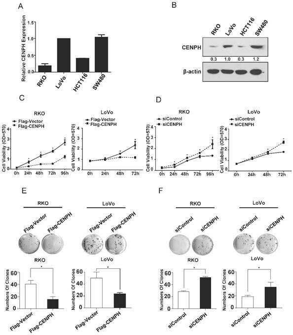 Phosphorylation of Dishevelled by Protein Kinase RIPK4