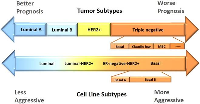 Breast Cancer Cell Line Classification And Its Relevance