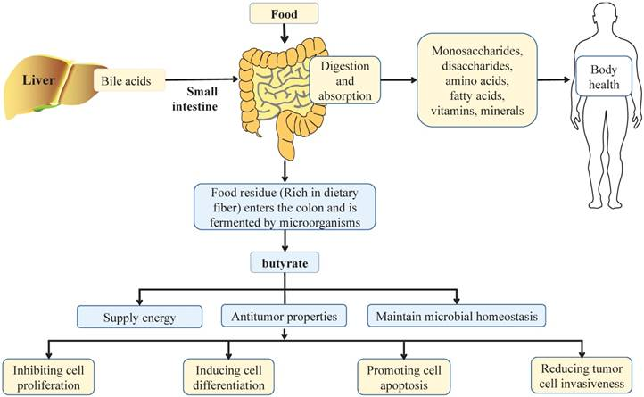 Effects Of The Intestinal Microbial Metabolite Butyrate On The Development Of Colorectal Cancer