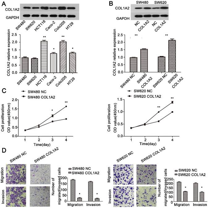 The inhibitory effects of COL1A2 on colorectal cancer cell