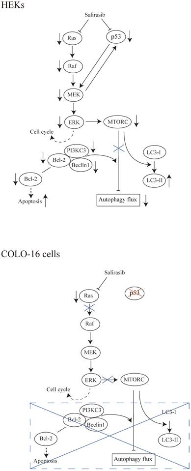 Is Ras A Potential Target In Treatment Against Cutaneous Squamous