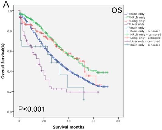 l esame della prostata liver