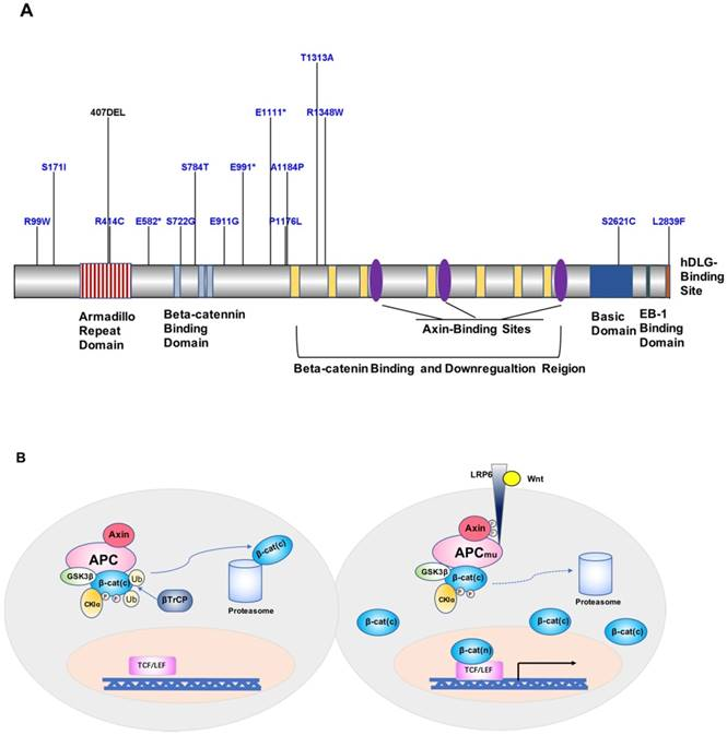 Advances In Identification Of Susceptibility Gene Defects Of Hereditary Colorectal Cancer