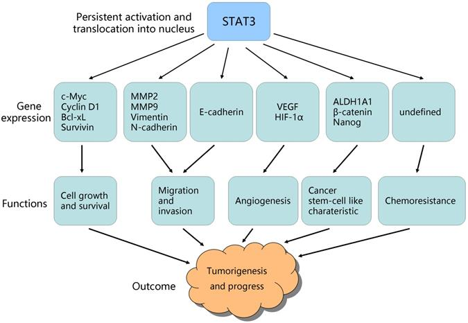 Stat3 Signaling In Ovarian Cancer A Potential Therapeutic Target