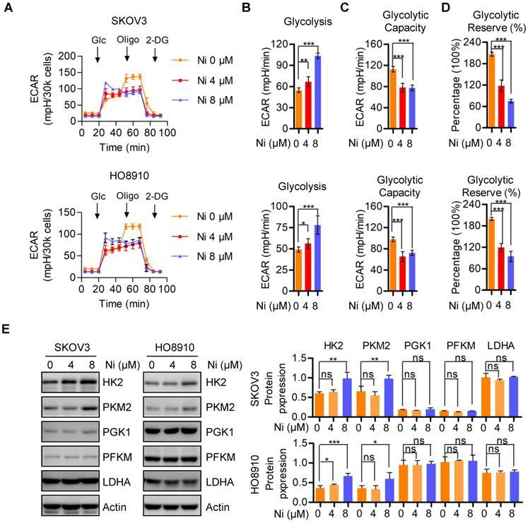 Niclosamide Inhibits Ovarian Carcinoma Growth By Interrupting Cellular Bioenergetics
