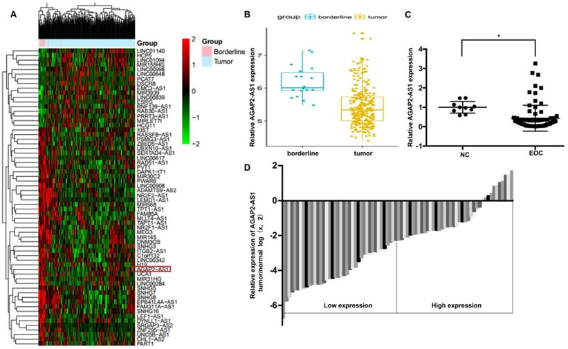 The Antisense Long Noncoding Rna Agap2 As1 Regulates Cell Proliferation And Metastasis In Epithelial Ovarian Cancer